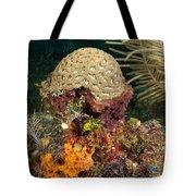 Coral Top Knot Tote Bag
