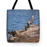 Cormorants And Pelican Tote Bag