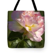 Cotton Candy Pink Peace Rose Tote Bag