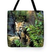Cougar Coming Through Tote Bag