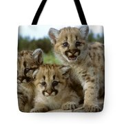 Cougar Cubs On A Rock Tote Bag