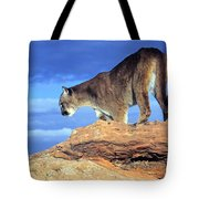 Cougar In The Sky Tote Bag