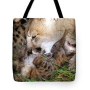 Cougar Mother Licks Kitten Tote Bag