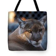 Cougar Portrait - Sad Eyes Tote Bag