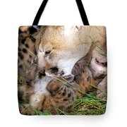 Couger Mom Cleans Kitten Tote Bag