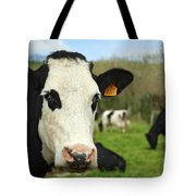Cow Facing Camera Tote Bag