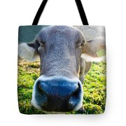 Cow In Backlight Tote Bag