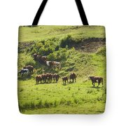 Cows Grazing On Grass In Farm Field Summer Maine Tote Bag
