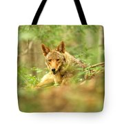 Coyote Caught Napping Tote Bag