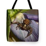 Crab Spider In A Violet Tote Bag