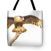 Crested Caracara Taking Off Tote Bag