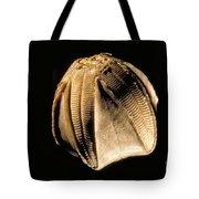 Crinoid Fossil Tote Bag