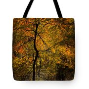 Crooked Tree At Beaver's Bend Tote Bag