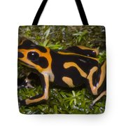 Crowned Poison Frog Tote Bag