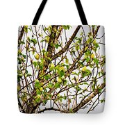 Cucumber Tree Blossoms Tote Bag