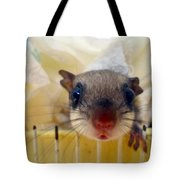 Curious Flyer Tote Bag