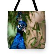 Curious Peacock Tote Bag