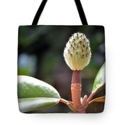 Curly Browns Tote Bag