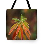 Cushion Spurge Tote Bag