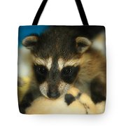 Cute Face Behind The Mask Baby Raccoon Tote Bag