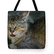 Da Cat Tote Bag