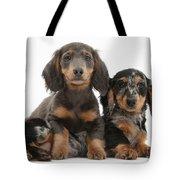 Dachshund And Merle Dachshund Pups Tote Bag