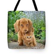 Dachshund And Tabby Tote Bag