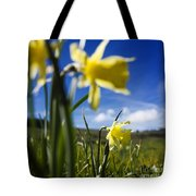 Daffodils In Cezallier. Auvergne. France. Europe Tote Bag