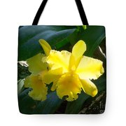 Daffodils In The Wild Tote Bag