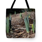 Daffodils Narcissus Tote Bag