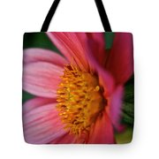 Dahlia Candles Tote Bag