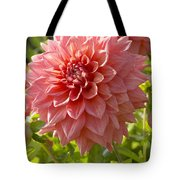 Dahlia Dahlia Sp Beverly Fly Variety Tote Bag