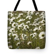 Daisy Fields Forever - Alabama Wildflowers Tote Bag