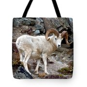Dall's Sheep Tote Bag