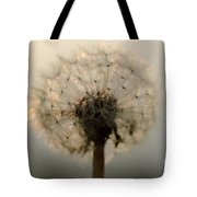 Dandelion In Backlight Tote Bag