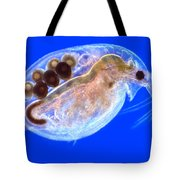 Daphnia With Eggs Tote Bag