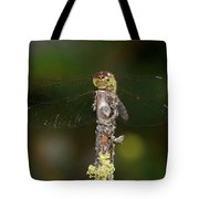 Darter 7 Tote Bag