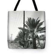 Date Palms On A Country Road Tote Bag