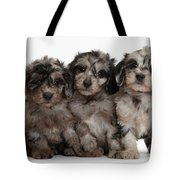 Daxiedoodle Poodle X Dachshund Puppies Tote Bag by Mark Taylor