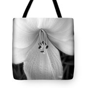 Daylily Study In Bw Tote Bag