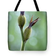 Dazzling Canna Seed Pods Tote Bag by Kathy Clark