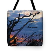 Dead Trees At Sunrise Tote Bag
