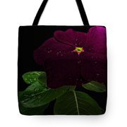 Deep Burgandy Impatient Tote Bag