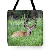 Deer At Rest Tote Bag
