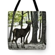 Deer In The Woods Tote Bag