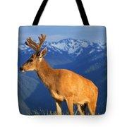 Deer With Antlers, Mountain Range In Tote Bag