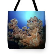 Dendronephthya Soft Coral, Acasta Reef Tote Bag