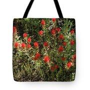 Desert Paint Brush Tote Bag