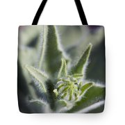Desert Sunflower Geraea Canescens Bloom Tote Bag