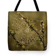 Dew Highlights An Orb-weaver Spiders Tote Bag